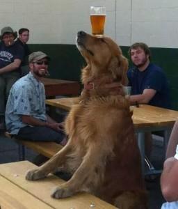 chien-biere