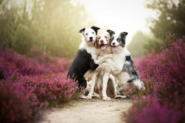 chiens-amis